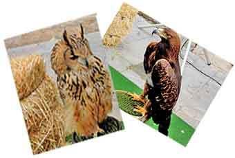 medieval_birds