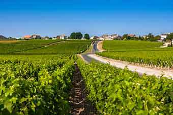 wine yard tours in bordeaux