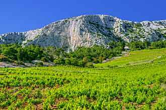vineyards_hvar_island